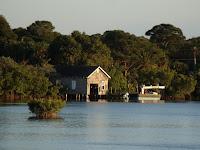 Entre pinos y manglares
