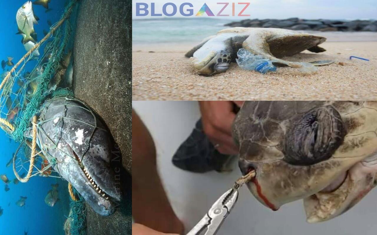 Paus dan Kura-kura lagi lagi terkena dampak dari sampah