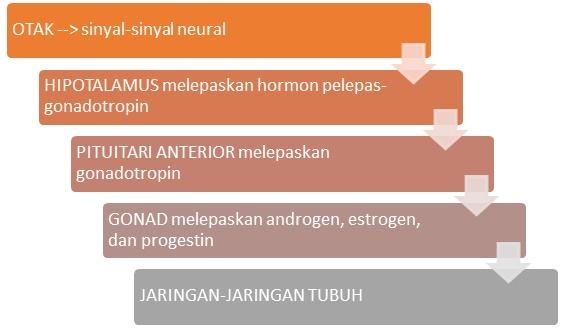 Pengertian Sistem Hormon dan Peristiwa Kimiawi pada Manusia