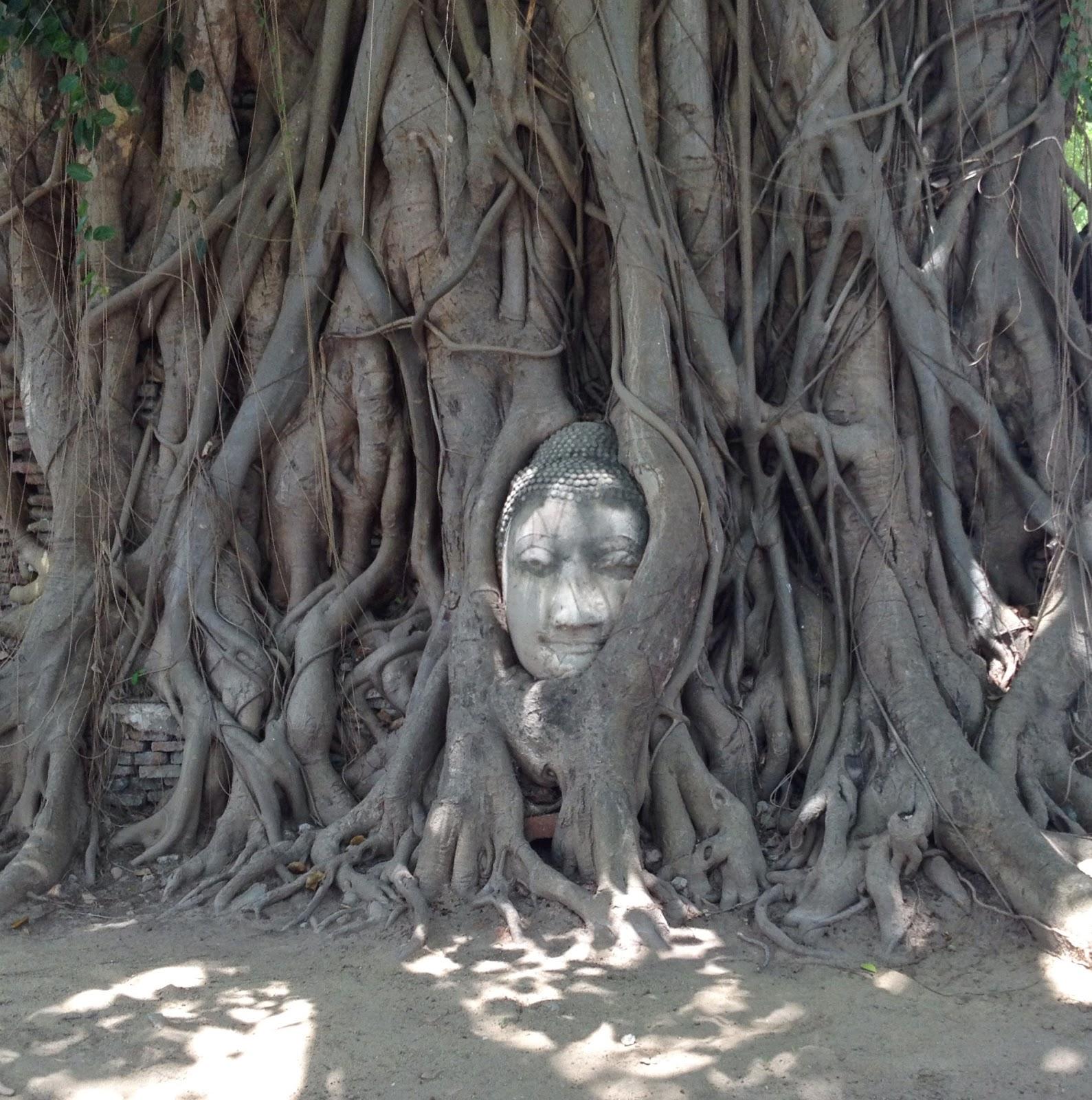 Ayutthaya - Wat Phra Mahathat - close up of the Buddha head