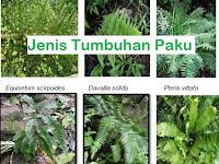 Tumbuhan Paku (Pteridophyta)