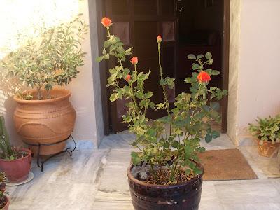 Αμμεση βοήθεια σε φυτά που έχουν αρχίσει να χαλάνε