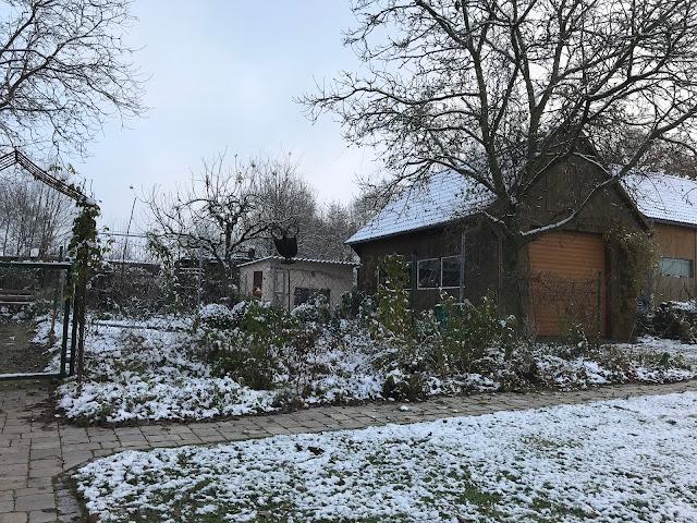 Staudenbeet, Winter, winterliches Staudenbeet