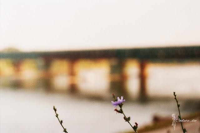 most grański, kwiat chaber, wisła