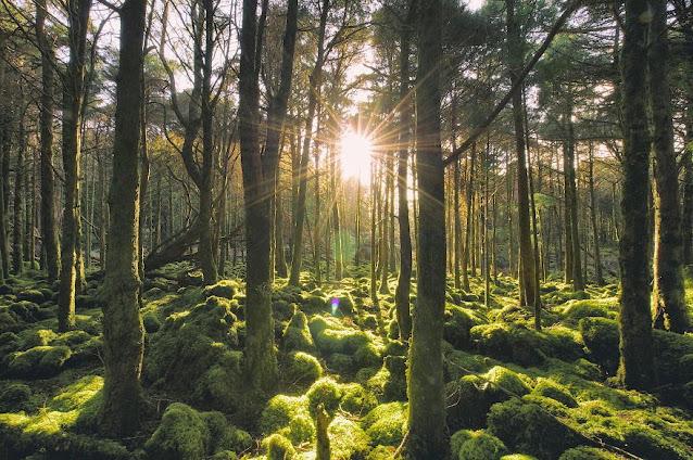 šumsko područje