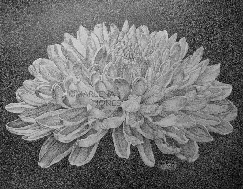 01-Chrysanthemum-Marlena-Jones-www-designstack-co