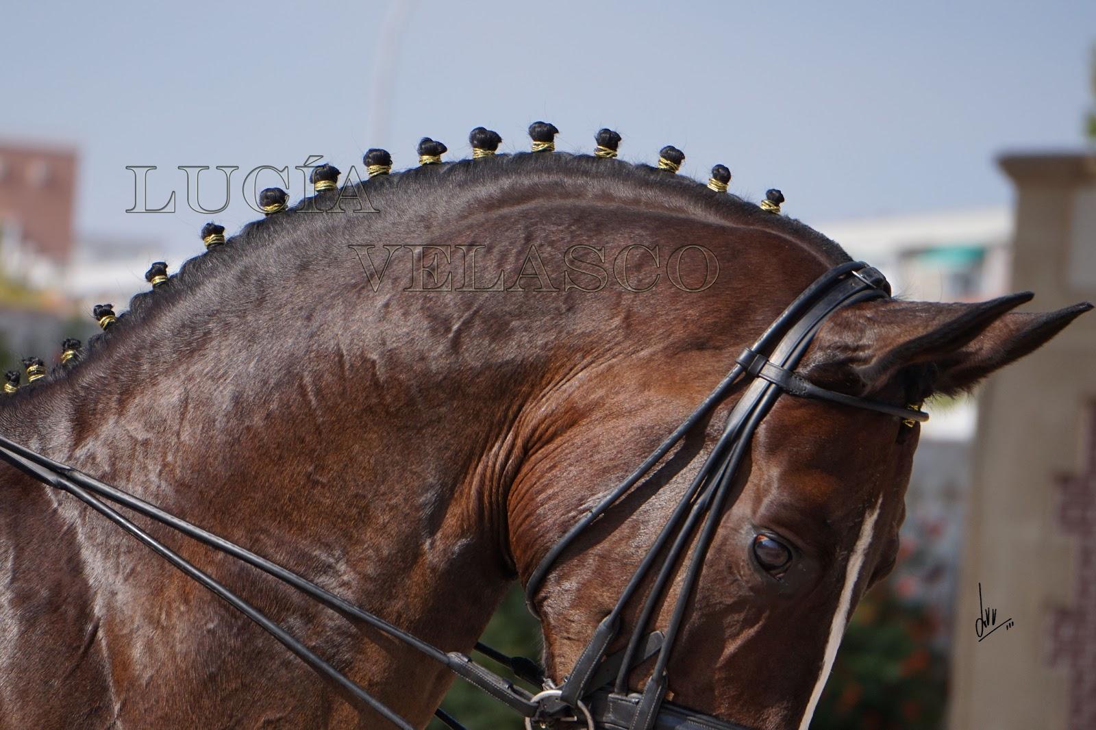 Imagen perfecta peinados para caballos Colección De Cortes De Pelo Ideas - Lucia Velasco fotografia equina: Peinados de crines