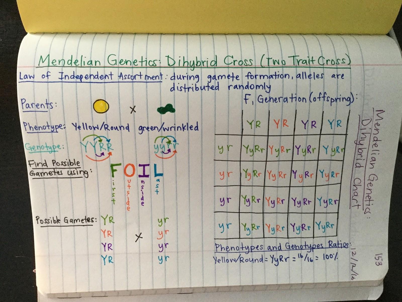 Mrs Paul  Biology: Biology 20162017 ChartsNotes