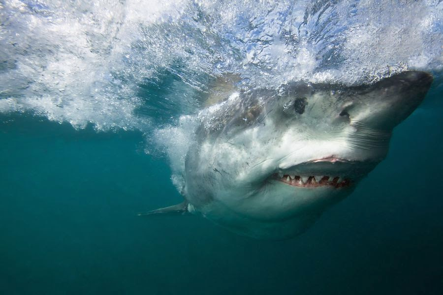 Stunning Sharks Photography
