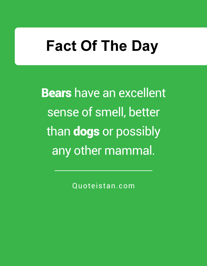 Bears have an excellent sense of smell, better than dogs or possibly any other mammal.