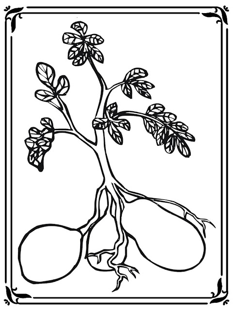 Sketch Of Potato Plant Coloring Pages