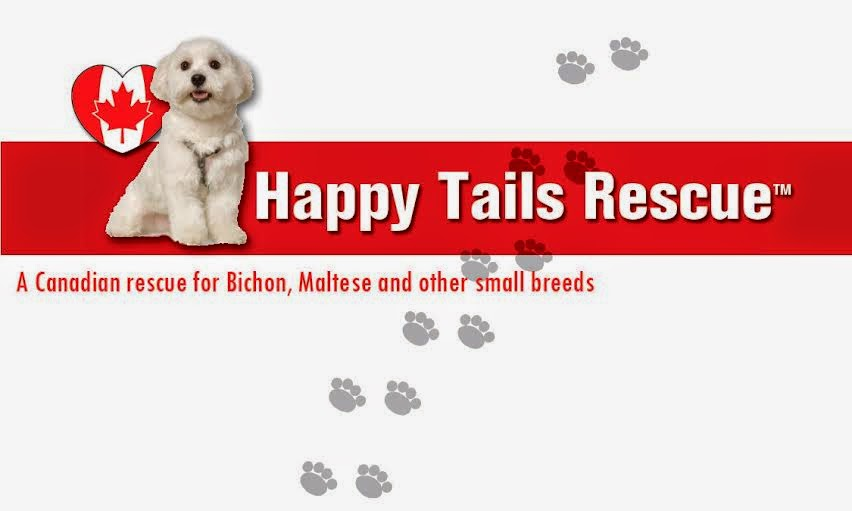 Toronto Dogs Directory: Toronto Dog/Cat Adoption And Rescue