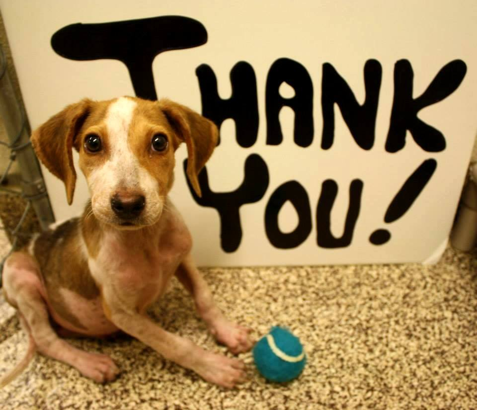 Https Www Charlestonanimalsociety Org Day Training Dog Obedience