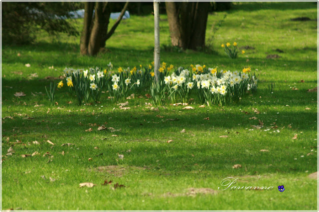 mason bees, beaver, spring flowers, pszczoły murarki, wiosenne kwiaty, bóbr, kaczki krzyżówki