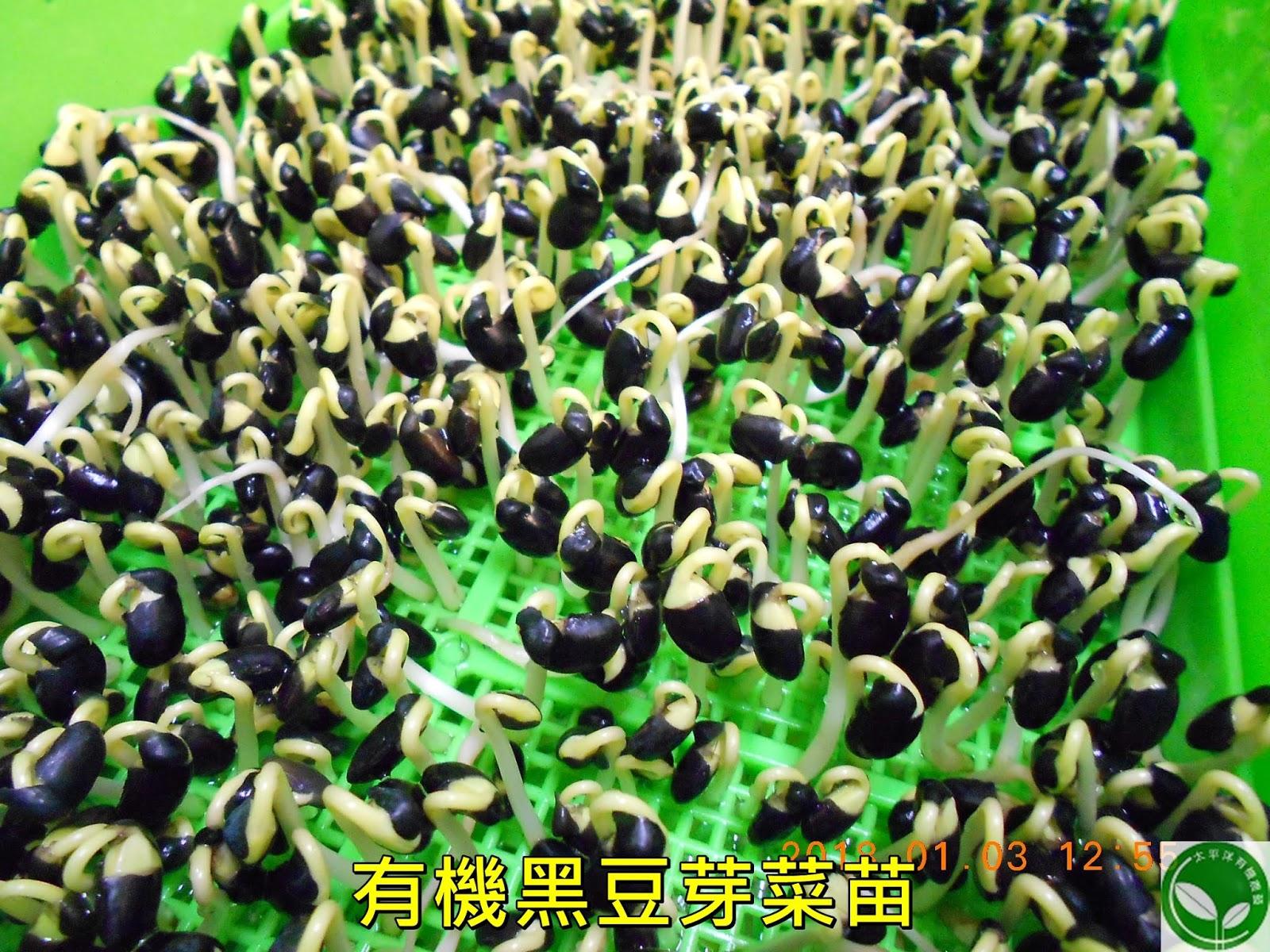 黑豆,台灣黑豆,青仁黑豆,台灣黑豆哪裡買,黑豆水的煮法,黑豆酒購買,黑豆水作法,黑豆芽生吃,黑豆水,黑豆茶煮法
