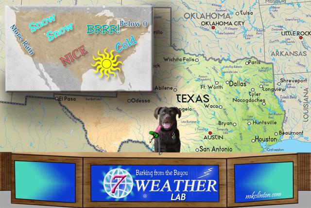 Labrador Retriever forecasting the weather