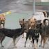 /VIDEO/ Povećan broj ugriza pasa lutalica: Građani zabrinuti za svoju sigurnost