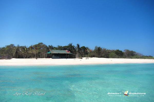 Apo Island, Apo Reef - Schadow1 Expeditions