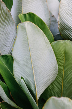 Greenery Pantone Colour of the Year 15-0343 Tropical Plant Leaves