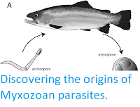 http://sciencythoughts.blogspot.co.uk/2015/11/discovering-origins-of-myxozoan.html