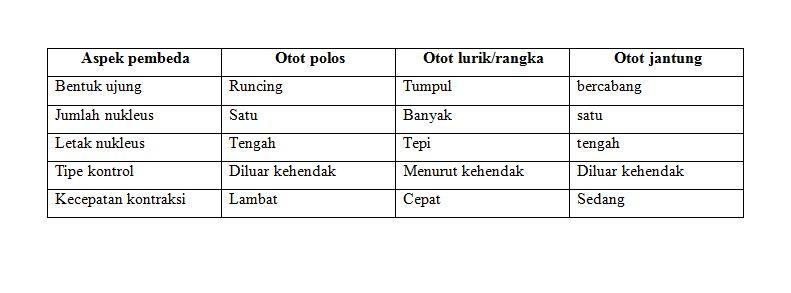 Perbedaan Otot Polos Otot Lurik Dan Otot Jantung Blog Pak Pandani