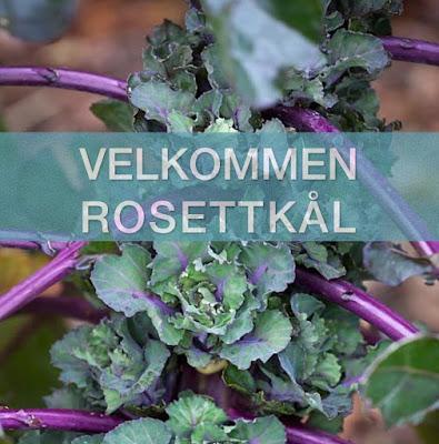 ny grønnsak i norge