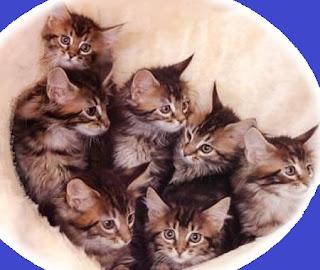 Gatti e gattini appena nati
