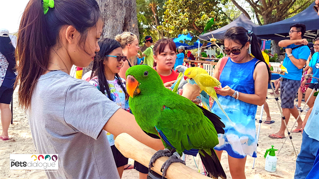 Parrot event in Singapore