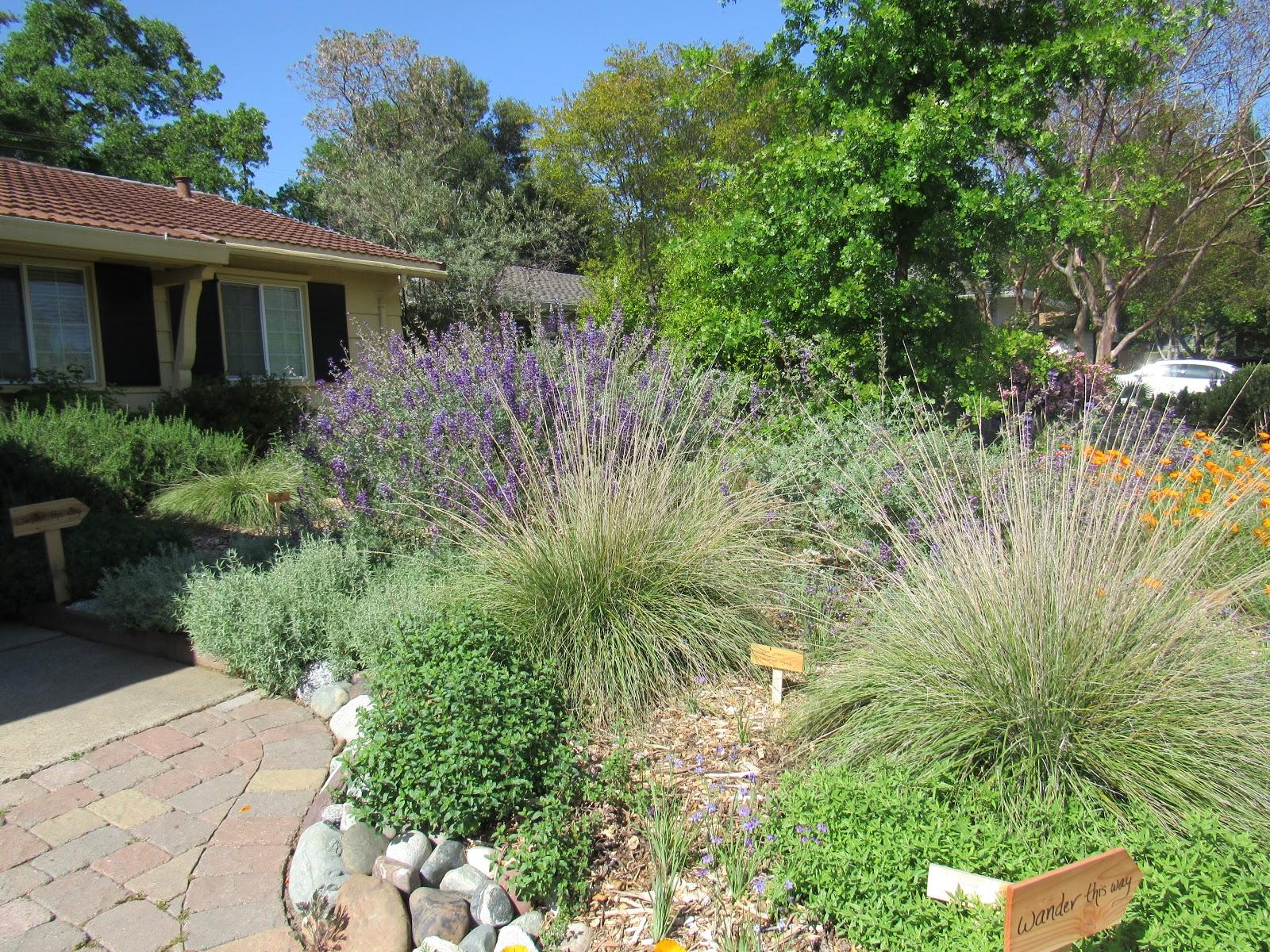 Designing A Native Garden Part Iii Visit Local Gardens