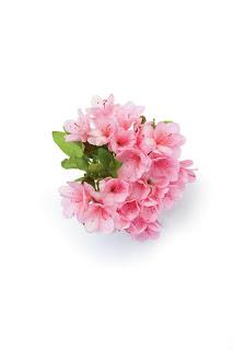Gambar Bunga Azalea yang Indah 5