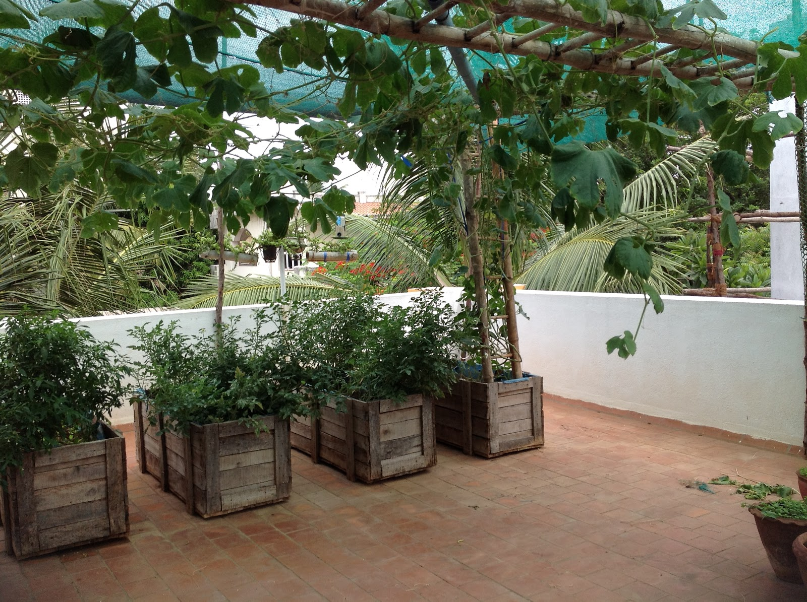 ORGANIC Thoughts: My vegetable terrace garden