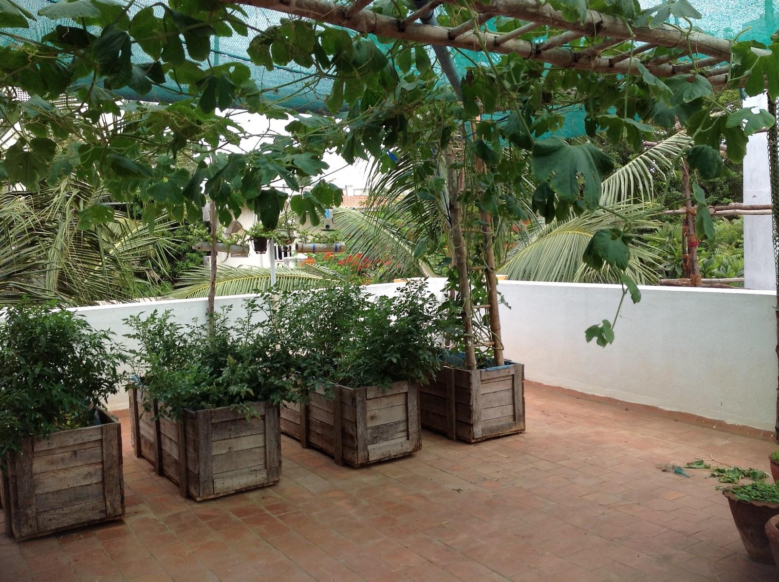 Kitchen Garden Ideas Kerala
