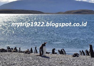 Penguin Peri-Philip Island Nature Park (Melbourne)