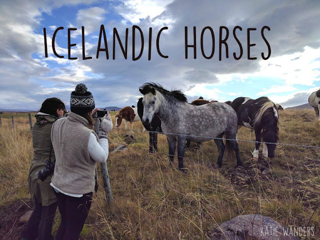 Horse riding holidays in Iceland (3 destinations) - Far ... |Icelandic Horse Tours