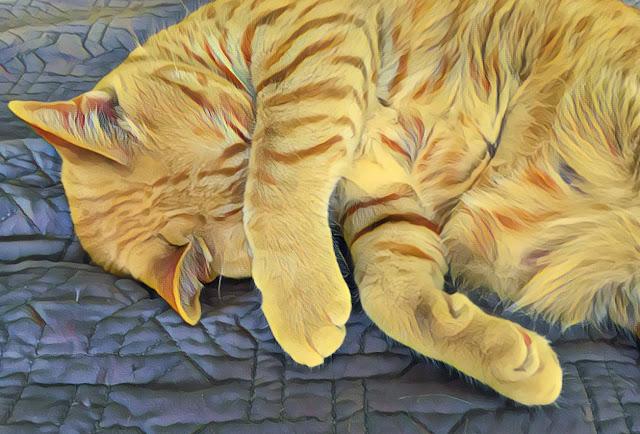 PBJ, a taabby cat