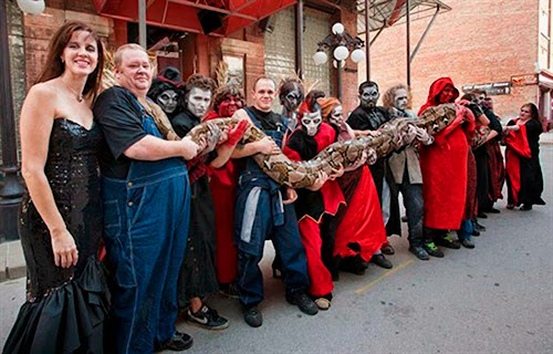 longest snake - guinness world records