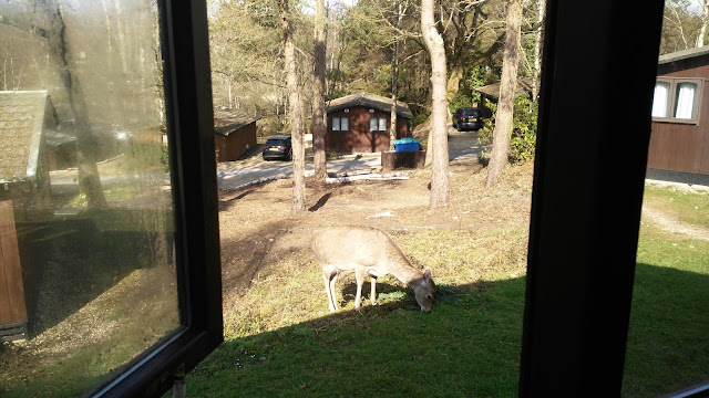 A deer eating grass outside a lodge, other lodges and trees surround it