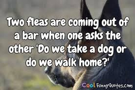 Two fleas are coming out of a bar when one asks the other do we take a dog or do we walk home?