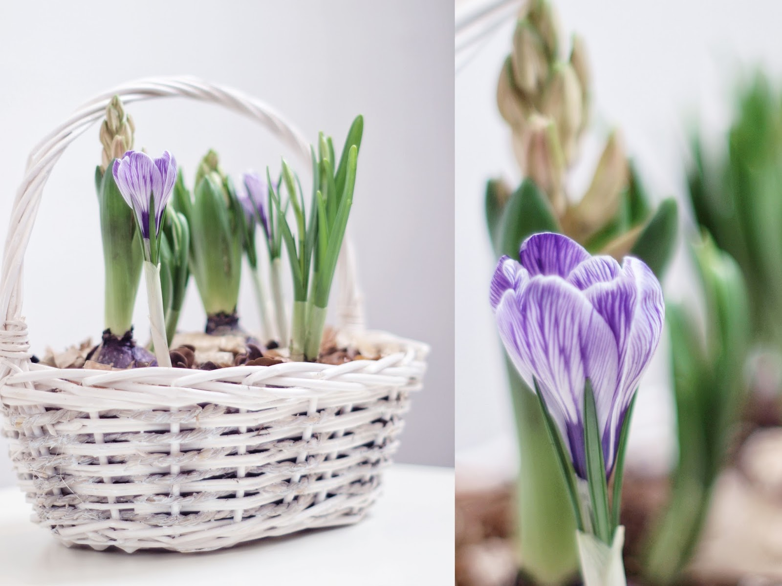 How to bring spring into your home