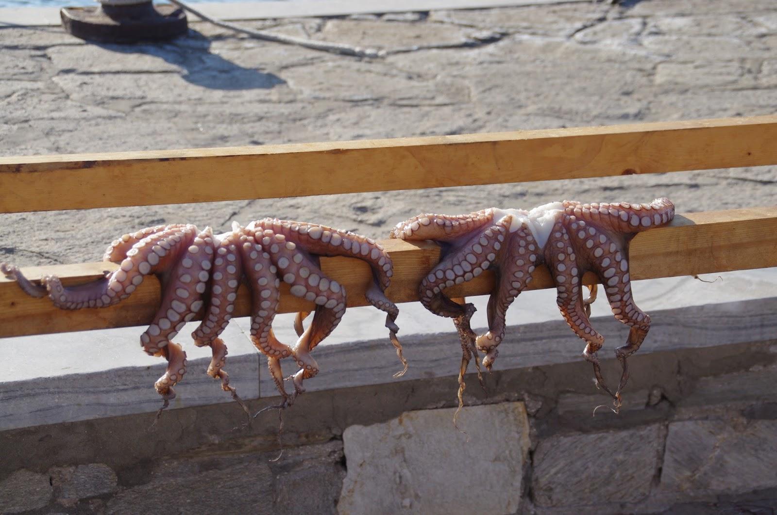 Octopus Paros