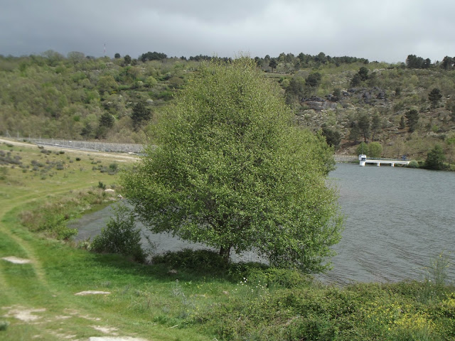 Barragem da Teja, Terrenho (Trancoso)
