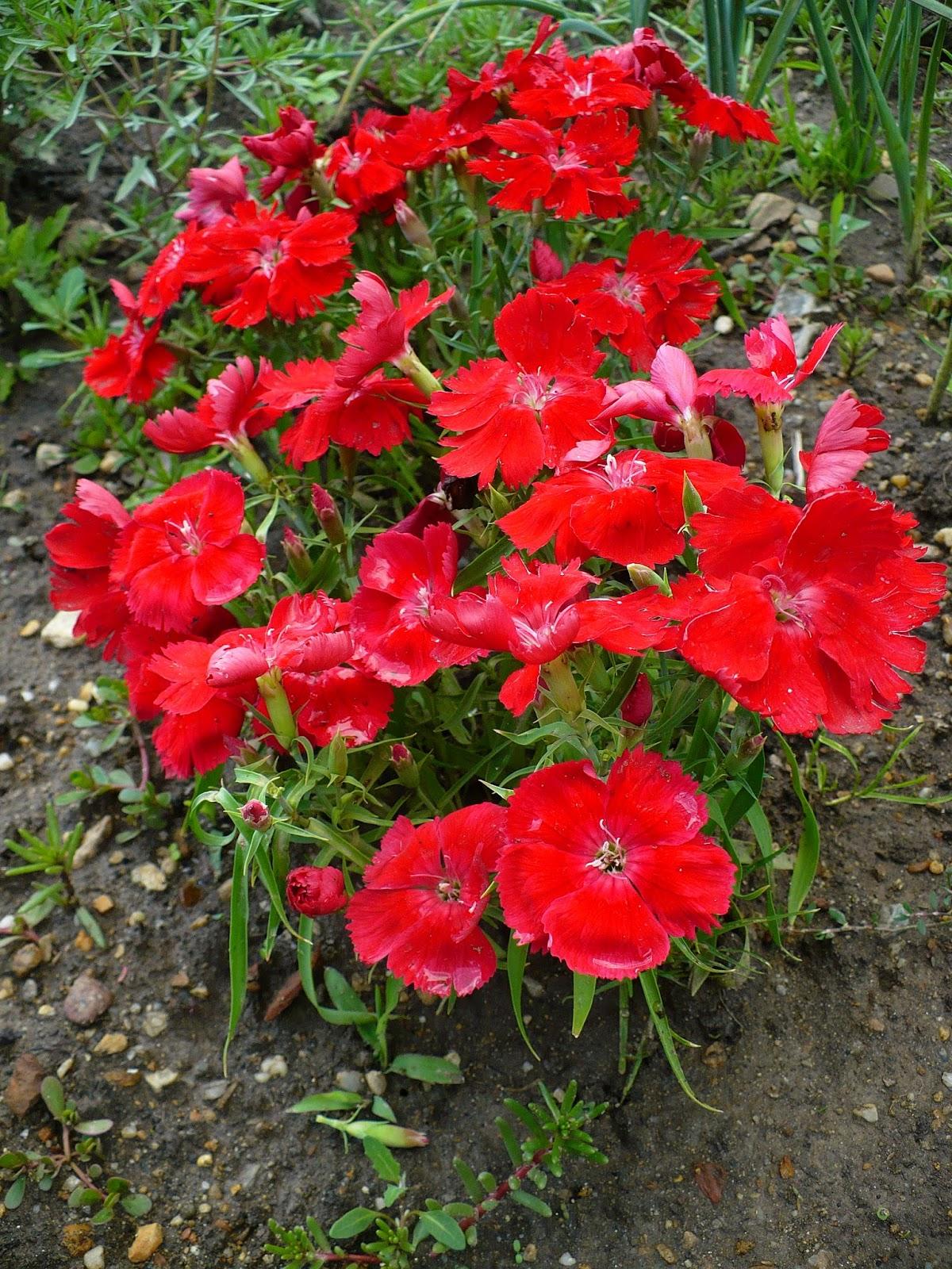Sera de flori brasov webcam