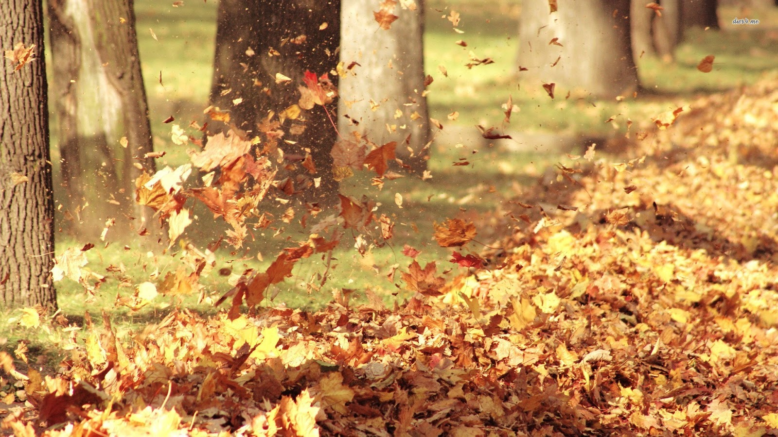 Dream About Wallpaper Falling Off Autumn Hd Wallpapers Hd Wallpapers