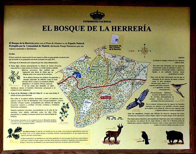 Bosque de la Herrería - AlfonsoyAmigos