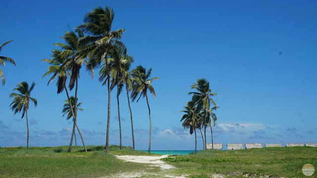 frente al mar caribe, palmeras
