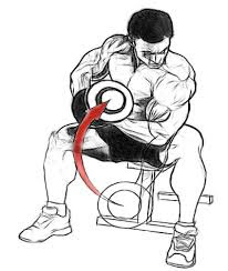 concetration-dumbbell-cull-Biceps-exercise