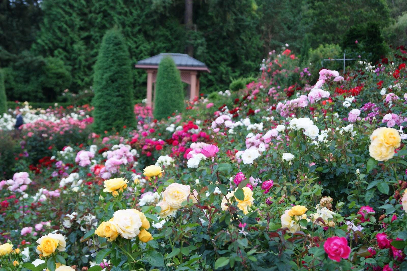 園藝治療 - 不需說話的力量!: 園藝治療對精神疾病的幫助(一)