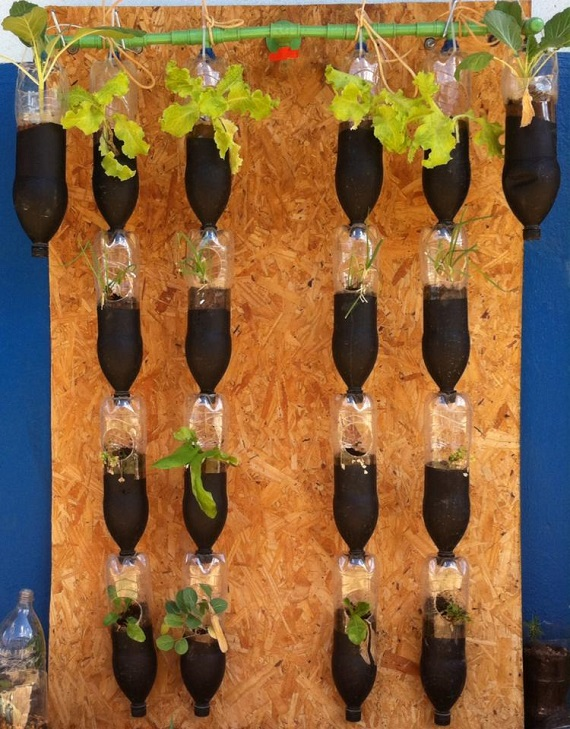 Horta Vertical / suspensa com garrafa pet fixada em OSB