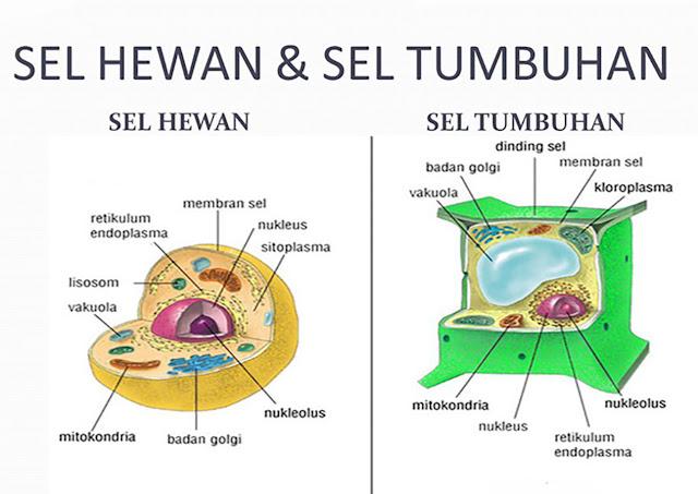 Perbedaan Sel Hewan dan Sel Tumbuhan, ciri Sel Hewan dan Sel Tumbuhan, beda Sel Hewan dan Sel Tumbuhan