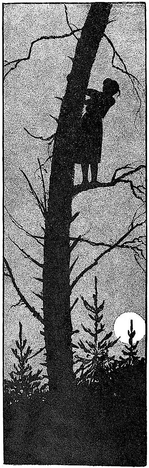 an Artus Scheiner 1921 silhouette illustration of a girl up a tree at night